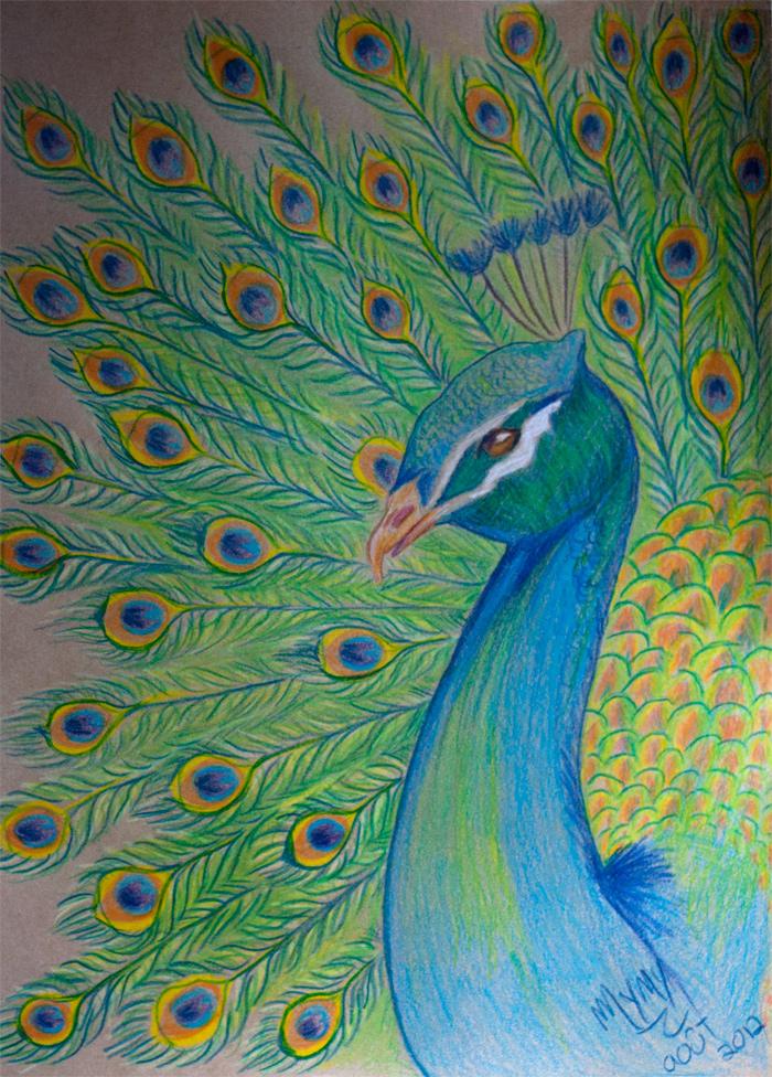 Bird 39 n 39 roll sugarplum - Dessin de paon ...