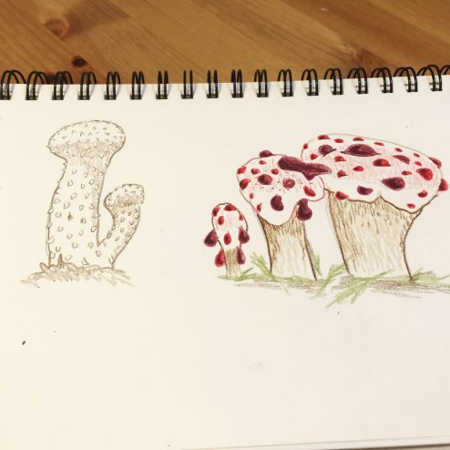 Common Puffball & Bleeding Tooth Fungus