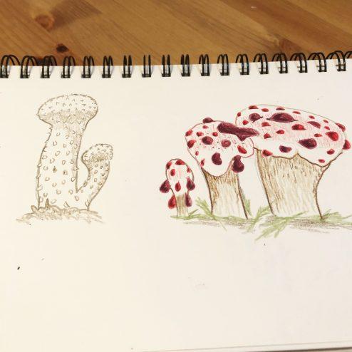 Common Puffball & Bleeding Tooth Fungus
