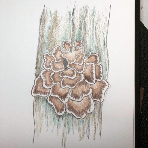 Hen of the woods