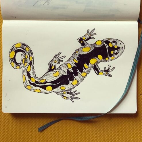 Salamandre, encre et crayons de feutre